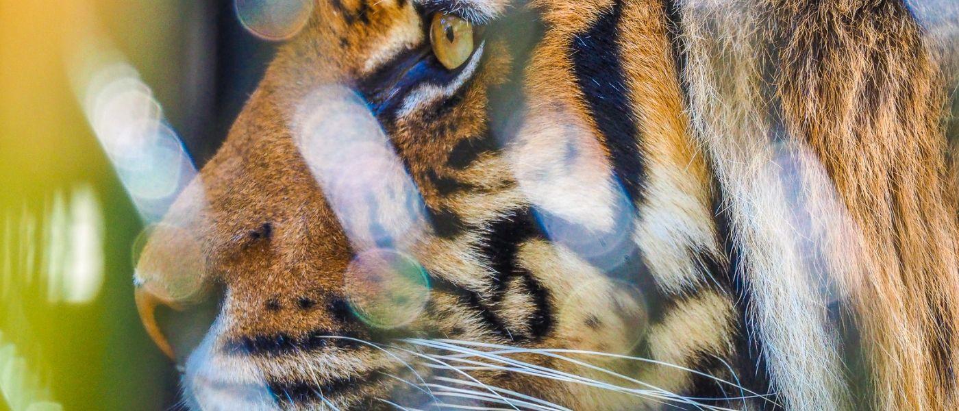 Maximiser Vos Chances Sur Les Machines À Sous De Slots Zoo